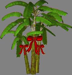 palm-christmas